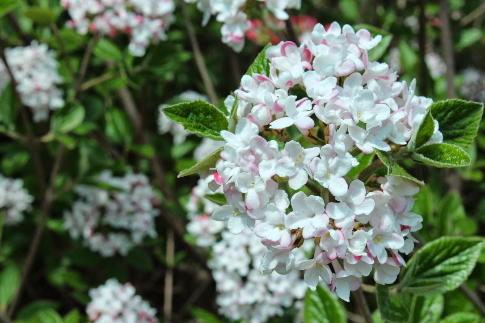 Springtime at Greenfield Village