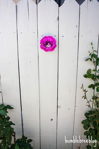 Backyard Flower Niche-12