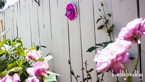 Backyard Flower Niche-14